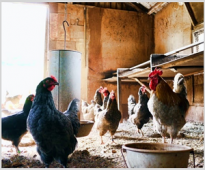 Effect of the application of VemoHerb T on reproductive performance of broiler breeders