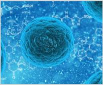 Фуражните добавки ВемоХерб могат да подобрят чревната микрофлора при животните
