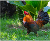 Effect of application of VemoHerb T on cocks' semen quality in poultry parent flocks