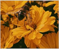 Herbal extracts show extraordinary results over the health of bee hives